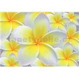 Vliesové fototapety žlté kvety Plumeria