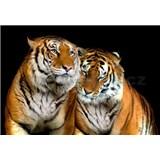 Vliesové fototapety tigre, rozmer 312 x 219 cm