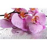 Vliesové fototapety ružová bodkovaná orchidea, rozmer 312 x 219 cm