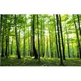 Vliesové fototapety les, rozmer 312 cm x 219 cm