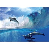 Vliesové fototapety delfíny