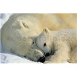 Fototapeta National Geographic Polar Bears, rozmer 184 x 127 cm