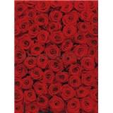 Fototapeta červené ruže, rozmer 183 x 254 cm