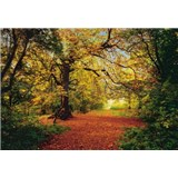 Fototapeta Autumn Forest