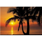Fototapeta Palmy Beach Sunrise