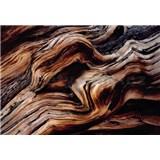 Fototapety starý strom