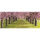 Vliesové fototapety spring, rozmer 250 x 104 cm