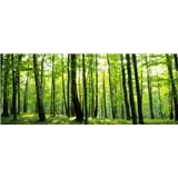 Vliesové fototapety les, rozmer 250 x 104 cm