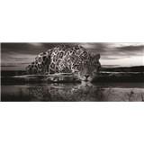 Vliesové fototapety jaguár čiernobiely, rozmer 250 x 104 cm