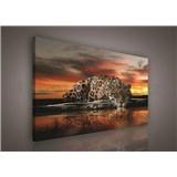 Obraz na stenu jaguár 100 x 75 cm