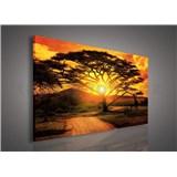 Obraz na stenu Austrálie pri zádapu slnka 75 x 100 cm