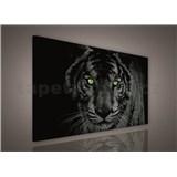 Obraz na stenu tiger zelené oči 75 x 100 cm