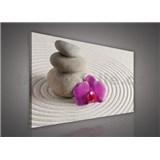 Obraz na stenu wellness orchidea 75 x 100 cm