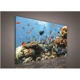 Obraz na stenu vodný svet 75 x 100 cm