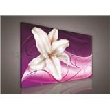 Obraz na stenu ľalie na ružovom podklade 75 x 100 cm