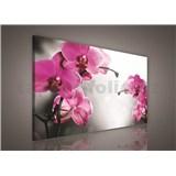 Obraz na stenu orchidea ružová 75 x 100 cm