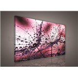Obraz na stenu ranná rosa ružová 75 x 100 cm