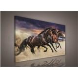 Obraz na stenu stádo koní 75 x 100 cm