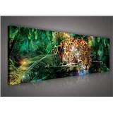 Obraz na stenu jaguár 145 x 45 cm