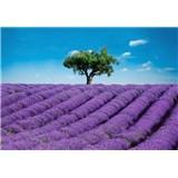 Fototapety Provence, rozmer 366 x 254 cm