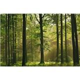 Fototapety Autumn Forest, rozmer 366 x 254 cm