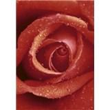 Fototapety Rose, rozmer 183 x 254 cm
