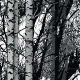 Samolepiace tapety d-c-fix - stromy brezy 45 cm x 15 m