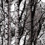 Samolepiaca tapeta Wood - 45 cm x 1,5 m (cena za kus)