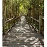 Vliesové fototapety mangrovový les rozmer 225 cm x 250 cm
