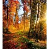 Vliesové fototapety prechádzka lesom rozmer 225 cm x 250 cm