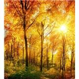 Vliesové fototapety slnečný svit v lese rozmer 225 cm x 250 cm
