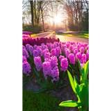 Vliesové fototapety hyacinty rozmer 150 cm x 250 cm