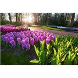 Vliesové fototapety hyacinty rozmer 375 cm x 250 cm