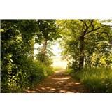 Vliesové fototapety lesná cesta rozmer 375 cm x 250 cm
