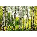 Vliesové fototapety brezový les rozmer 375 cm x 250 cm