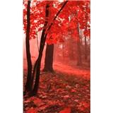 Vliesové fototapety hmlový les rozmer 150 cm x 250 cm