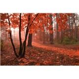 Vliesové fototapety hmlový les rozmer 375 cm x 250 cm