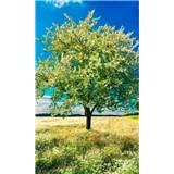 Vliesové fototapety rozkvitnutý strom rozmer 150 cm x 250 cm