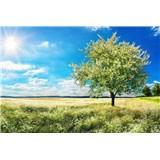 Vliesové fototapety rozkvitnutý strom rozmer 375 cm x 250 cm