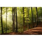 Vliesové fototapety les rozmer 225 cm x 250 cm