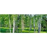 Vliesové fototapety brezy rozmer 375 cm x 150 cm