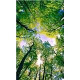 Vliesové fototapety stromy rozmer 150 cm x 250 cm