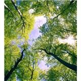 Vliesové fototapety stromy rozmer 225 cm x 250 cm