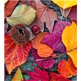 Vliesové fototapety farebné lístie rozmer 225 cm x 250 cm