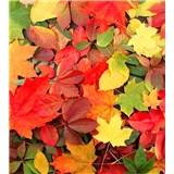 Vliesové fototapety farebný jeseň rozmer 225 cm x 250 cm