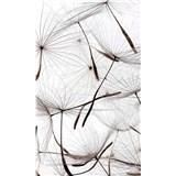 Vliesové fototapety lietajúci púpavy rozmer 150 cm x 250 cm
