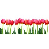 Vliesové fototapety tulipány rozmer 375 cm x 150 cm