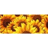 Vliesové fototapety kvety slnečnic rozmer 375 cm x 150 cm