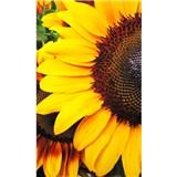 Vliesové fototapety slnečnica rozmer 150 cm x 250 cm