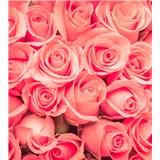 Vliesové fototapety ruže rozmer 225 cm x 250 cm